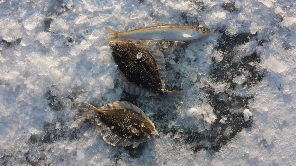 Отчёт о рыбалке в декабре. Тавричанка.