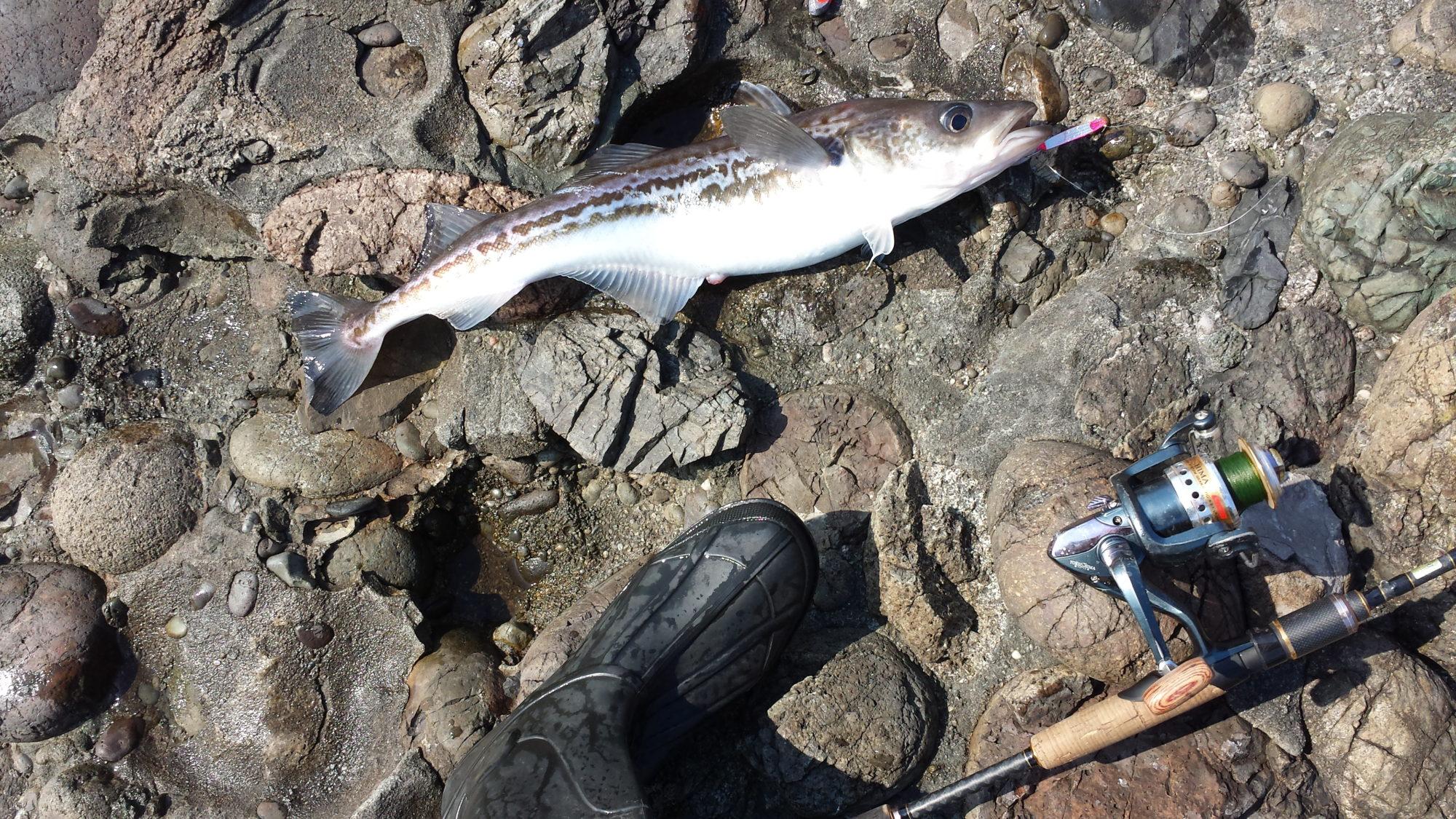 какая рыба клюет в начале апреля