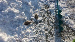 Отчёт о рыбалке в последние выходные февраля Тавричанка