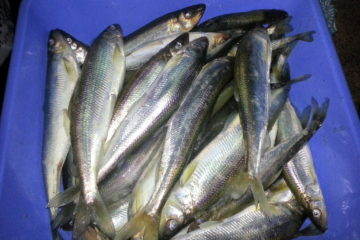 где ловить рыбу в брестской области