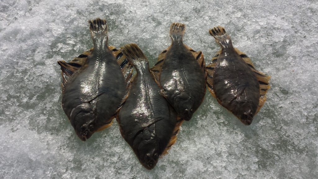 Отчёт о рыбалке на Океанской 19 марта 2017