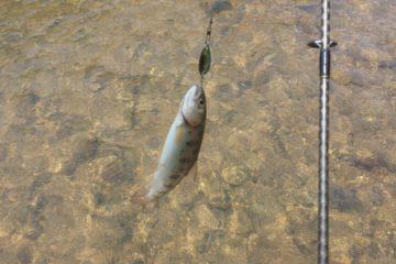 Отчёт о рыбалке на горной речке (р. Артёмовка, с. Многоудобное)