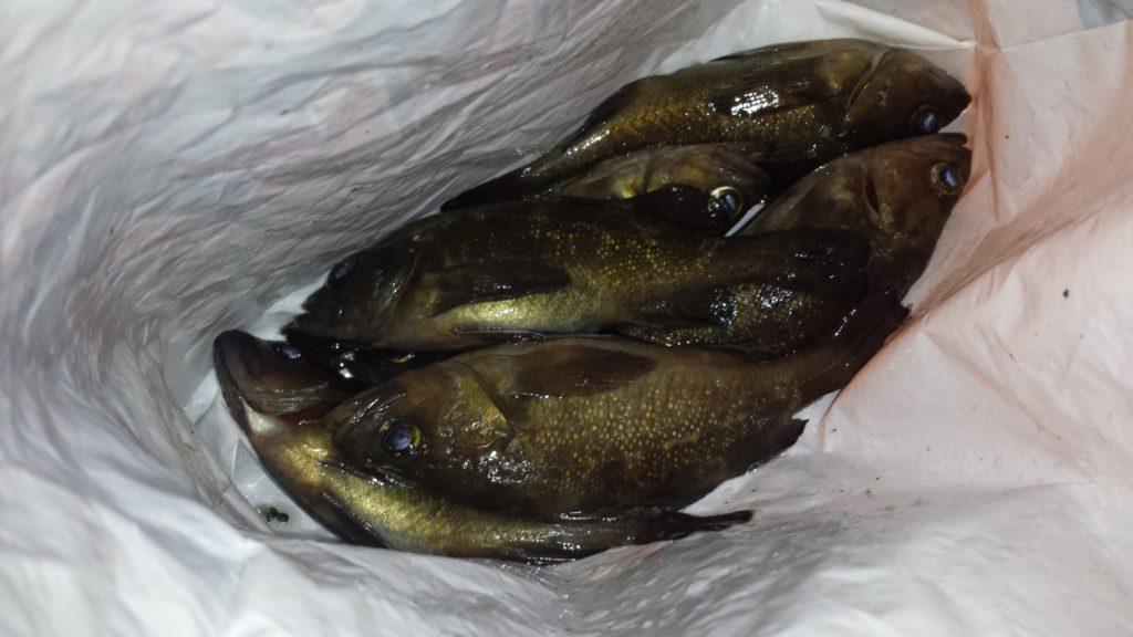 Отчёт о рыбалке с причала набережной ДВФУ