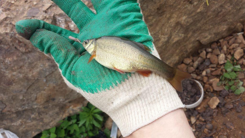 Отчёт о рыбалке в пруду напротив Авиаполиса Янковский