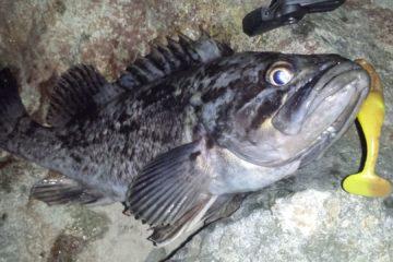 Отчёт о рыбалке под мостом на русский остров 16 июля
