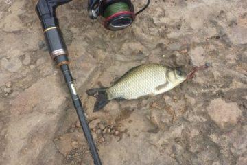 Отчёт о рыбалке в пруду 5 августа (Авиаполис Янковский)