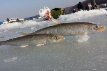 Отчёт о рыбалке в Тавричанке в декабре 2017