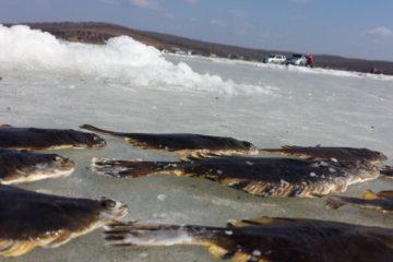 Отчёт о рыбалке. Тавричанка 24 февраля