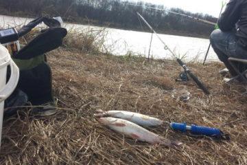 Отчет о рыбалке. Смеринка после дожей.