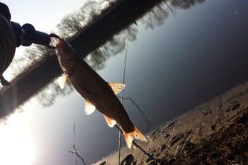 Отчет о рыбалке. Красноперка на Смеринке в ноябре