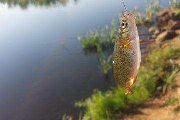 Отчёт о рыбалке г. Артём, пруд напротив Авиаполис Янковский