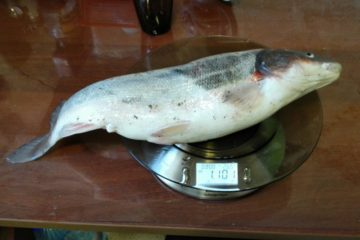 Отчёт о рыбалке 2 мая 2017. Краснопёрка, Суйфун, Красный Яр