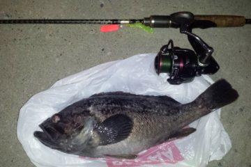 Отчёт о рыбалке в подмостовье 1 августа 2017