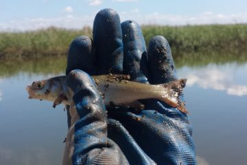 Отчёт о рыбалке на Майхэ. Последняя рыбалка перед осенью 2017.