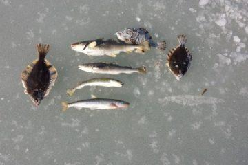 Отчёт о рыбалке в Тавричанке. 17 декабря 2017