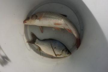 Отчет о рыбалке. Смеринка, октябрь 2018.